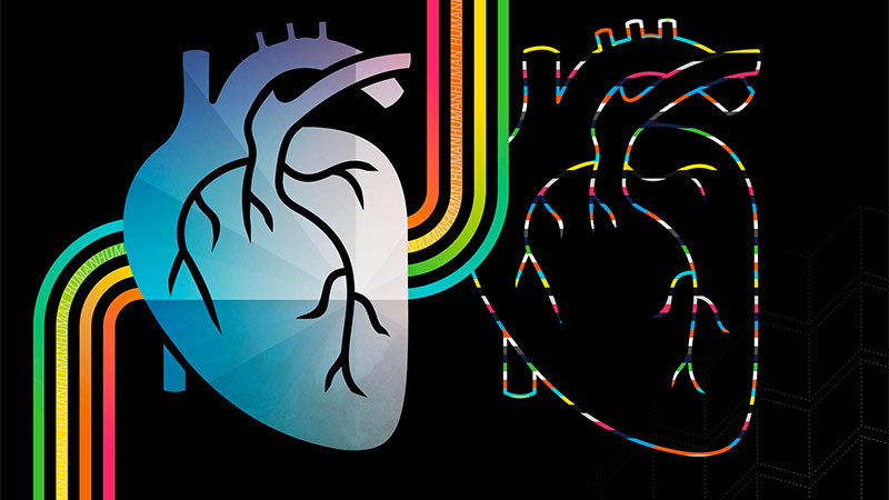 """Abstract heart illustration with rainbow colored veins entering and exiting. One of the veins on each side has the word """"human"""" flowing through it."""